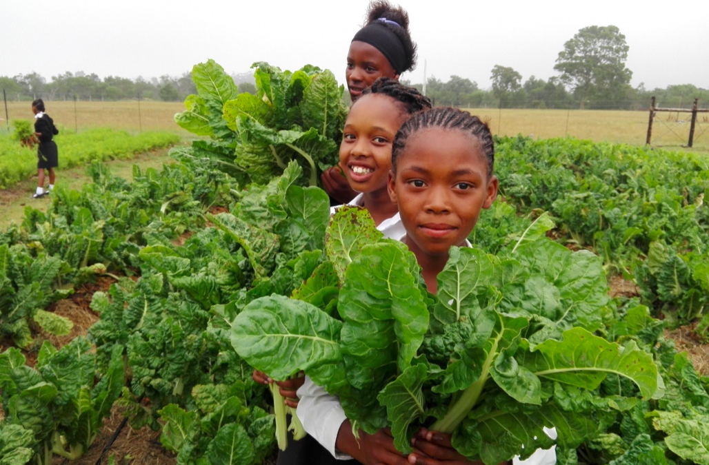 Innovative Urban Food Project Turning Dump Sites into Gardens of Hope